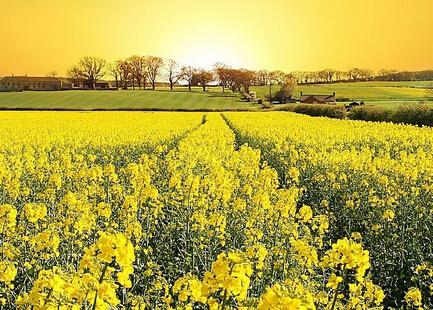 2015年《半月谈》第19期:乡村是一片广阔的天地